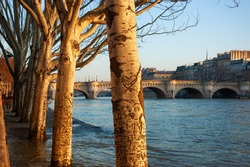 Paris, France. Plane trees row in high water of Seine river in winter.  Flooded embankment in evening golden sunlight rays. Seasonal landscape. Natural beauty background.