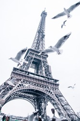 Paris in February covered in snow View of Eiffel Tower with seagull flying  Street photography