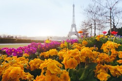 Paris in spring, yellow flowers in foreground and Eiffel tower blurred on background