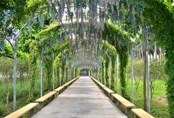 Park arch walking Road