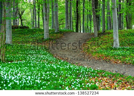 Park area with aspen trees and wood anemone flowers in spring