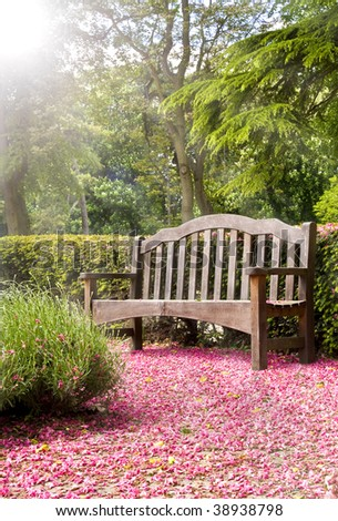 Park Bench Bathed in Sun Rays With Pink Blossom