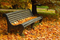 Park bench strewn with autumn yellow maple leaves. Wooden bench under the tree. Seasonal photography. Autumn moody background