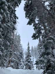 Park City Mountain Resort in Utah. Experts only Jupiter Bowl. Perfect ski conditions after a night of snowfall.
