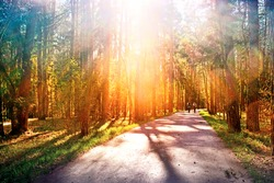 park forest landscape at sunset with sun rays through trees against setting sun background Wide view of road in wood towards setting sun People running along pathway Natural color of nature