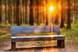 park forest with bench landscape at sunset against pine wood background front view of mystical forest at spring evening Setting sun shining through branches Focused on bench
