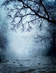 Park in a fog (grunge image)