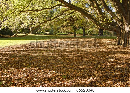 Park in Christchurch city on the South island of New Zealand