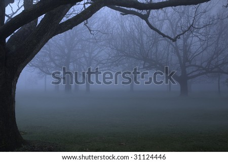 Park in dense blue fog in the early spring time