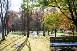 Park in late autumn with snow