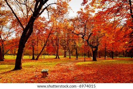 Park in November