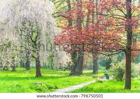 Park in spring - Shutterstock ID 796750501