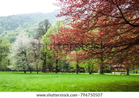 Park in spring - Shutterstock ID 796750507