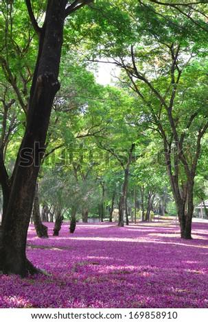 Park in spring season colorful