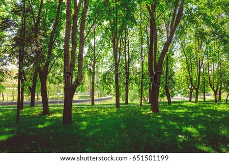 Park in the center of the city in sunny clear weather in summer - Shutterstock ID 651501199