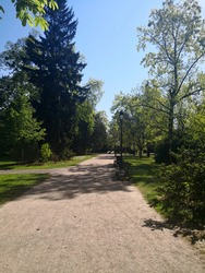 Park lane (alley) with benches and  street lamps framed by trees with bright green foliage in French park in April