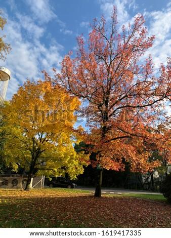 park, natural, natural beauty,sky, nature