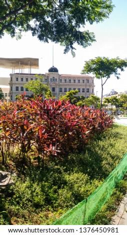 park nature green plant flower  #1376450981