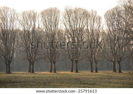 Park of Monza (Lombardy, Italy) at winter. Trees