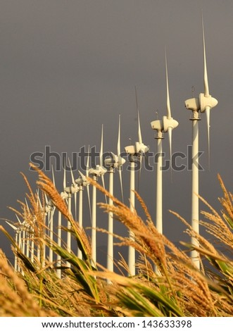 Park of wind turbines for electricity generation on gray background and corn spikes in unfocused foreground