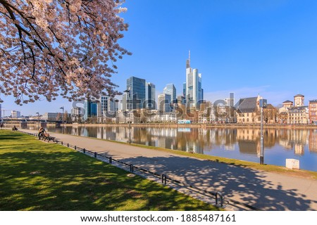 Park on the banks of the Main in Frankfurt. Trees with blossoms in spring. High-rise buildings in the city center of the financial district. Houses by the old town along the river