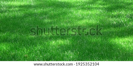 Park  Or Garden Shady Fresh Lawn with Emerald Green Grass Wide Background Or Texture. Panoramic View. Abstract Meadow Banner. Lawn Made From Turf Or Sod. Focus Selective. Сток-фото ©
