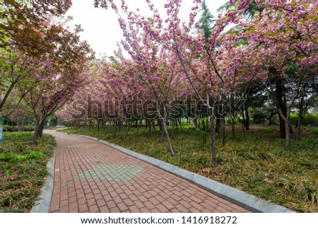 Park outdoor blooming peach long path #1416918272
