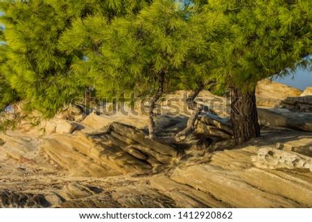 park outdoor bright colorful green tropic scenery landscape of cedar tree in rocky Mediterranean Greece beach waterfront  #1412920862