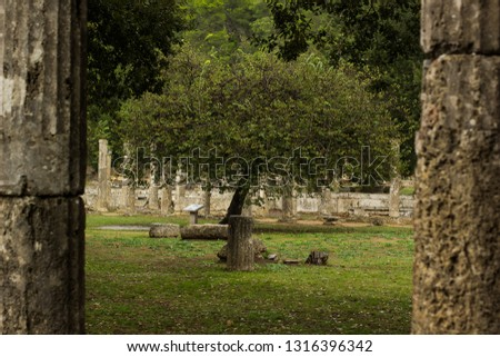 park outdoor garden natural environment photography of single tree foreshortening in symmetry frame of stone antique columns #1316396342