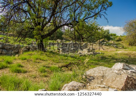 park outdoor outskirts space environment with old destroyed stone wall ruins exterior landscape design and trees in clear bright summer weather time #1256327440
