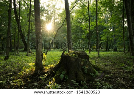 park outdoor simple natural scene in sun rise morning time with tree stump center of composition  #1541860523