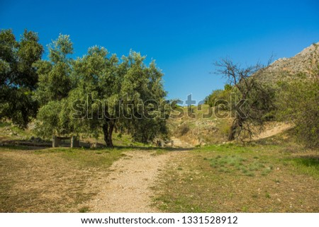 park outdoor summer nature environment with ground trail  #1331528912