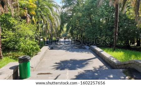 Park. Park Arboretum in Sochi
