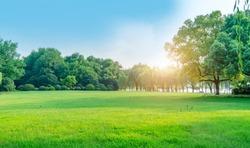 Park sunshine grassland green forest