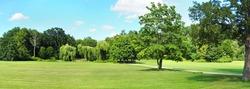 Park Tree Panorama