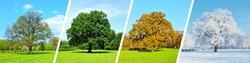 Park Tree Panorama - Four Seasons