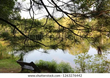 park tree scenes