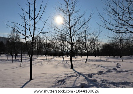 Park with snow in Bucarest Foto stock ©