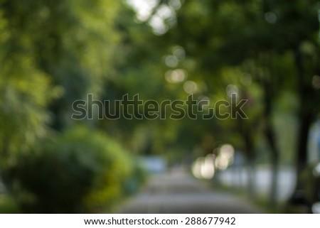 Park, wood bokeh background. Lush green trees defocused backdrop. \ Romantic trail.