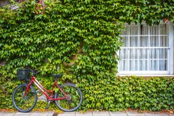 Parked red bicycle at ivy leaf wall, Oxford, UK