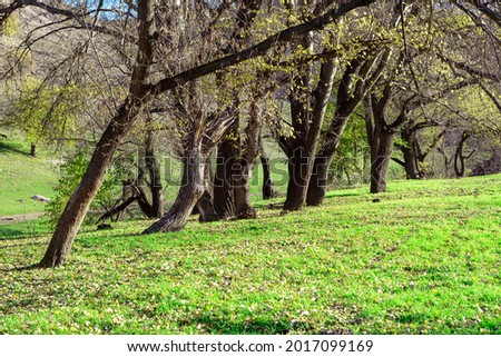 Parkland with deciduous trees in the springtime  Stock photo ©