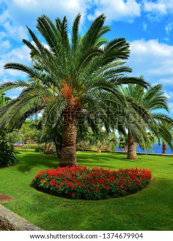 parks and vegetation in monaco #1374679904