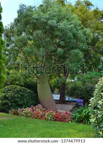 parks and vegetation in monaco #1374679913