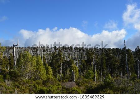 Parque Nacional Alerce Costero in La Unión, Chile. Foto stock ©