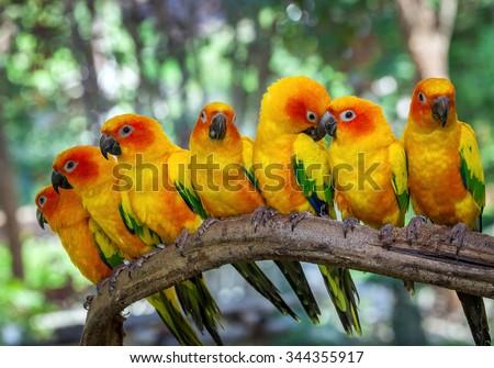 Stock Photo parrot