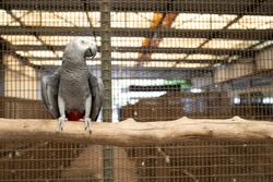 parrot african grey smuggle illegal animal business