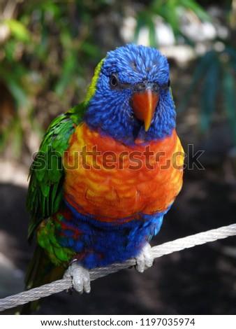 Parrot avian bright #1197035974