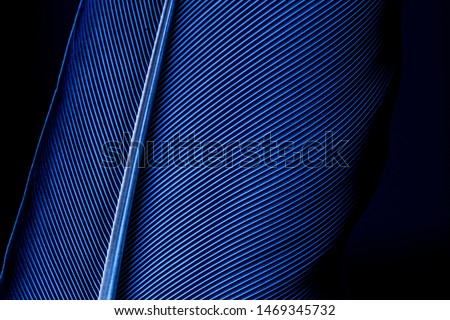 Parrot feather macro texture,Blue macro feather,Feather, Animal, Bird, UK, Macaw,Blue and Purple Feathers