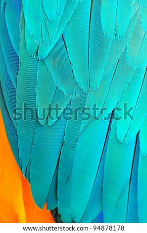 Parrot feathers background