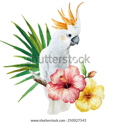 parrot, hibiscus, flowers, tropical, watercolor